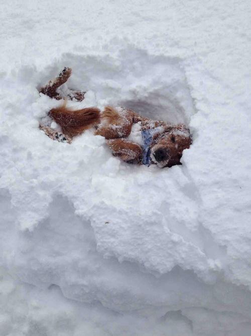 Dogilike.com :: ภาพสุดน่ารักๆ เมื่อปล่อยน้องหมาไว้กับหิมะ