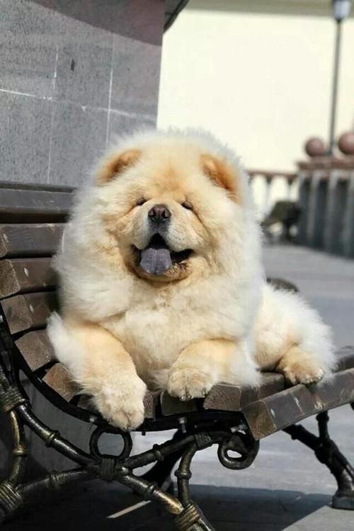 Dogilike.com :: รวมภาพน้องหมาน่ากอด ... หนาวแล้วมากอดหมากัน