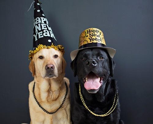 Dogilike.com :: รวมแฟชั่นสุดแนวของน้องหมาปาร์ตี้ส่งท้ายปีเก่า