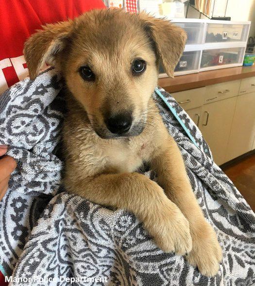 Dogilike.com :: เฉียดตาย! ลูกหมาถูกช่วยออกจากรถอุณหภูมิ 50 องศา