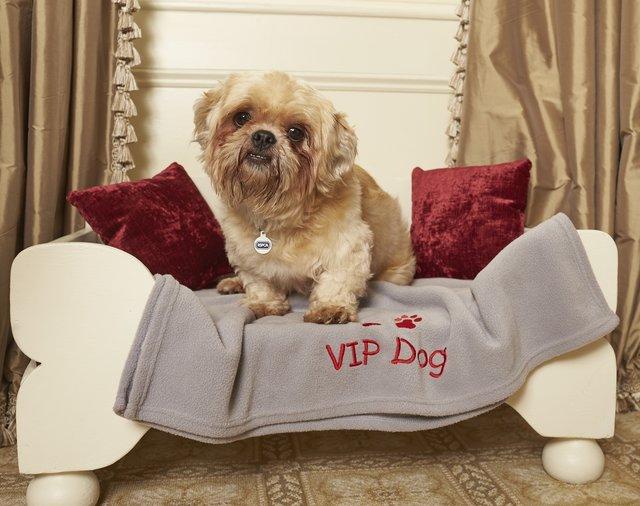 Dogilike.com :: สุนัขในศูนย์พักพิงสัตว์ได้ตั๋ว VIP ไปพักผ่อนที่โรงแรมหรู !