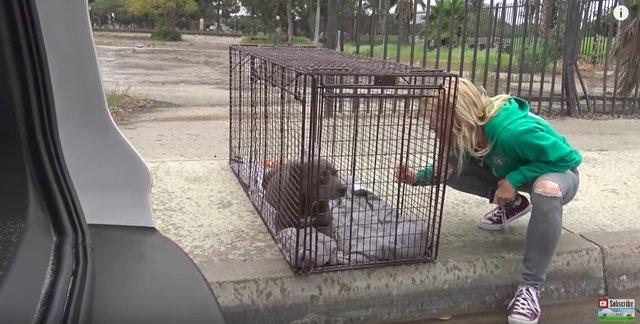 Dogilike.com :: โชคเข้าข้าง! สุนัขท้องแก่ถูกช่วยออกมาจากใต้ตึกได้ทันเวลา