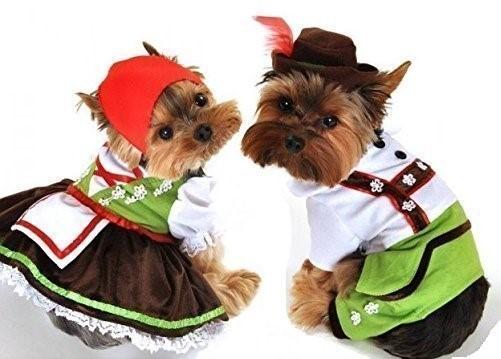 Dogilike.com :: ไขข้อข้องใจ ทำไมต่างประเทศถึงไม่ค่อยมีหมาจรจัด!