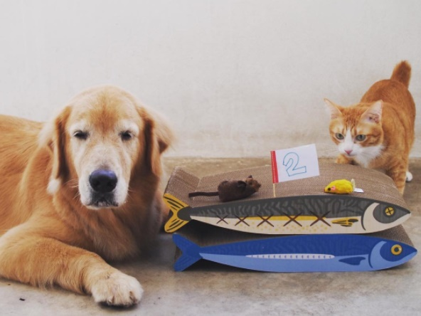 Dogilike.com :: หมาแมวใครว่าอยู่ด้วยกันไม่ได้ ... มาดูคู่ซี้ต่างสายพันธุ์ที่ใครเห็นก็ต้องหลงรัก