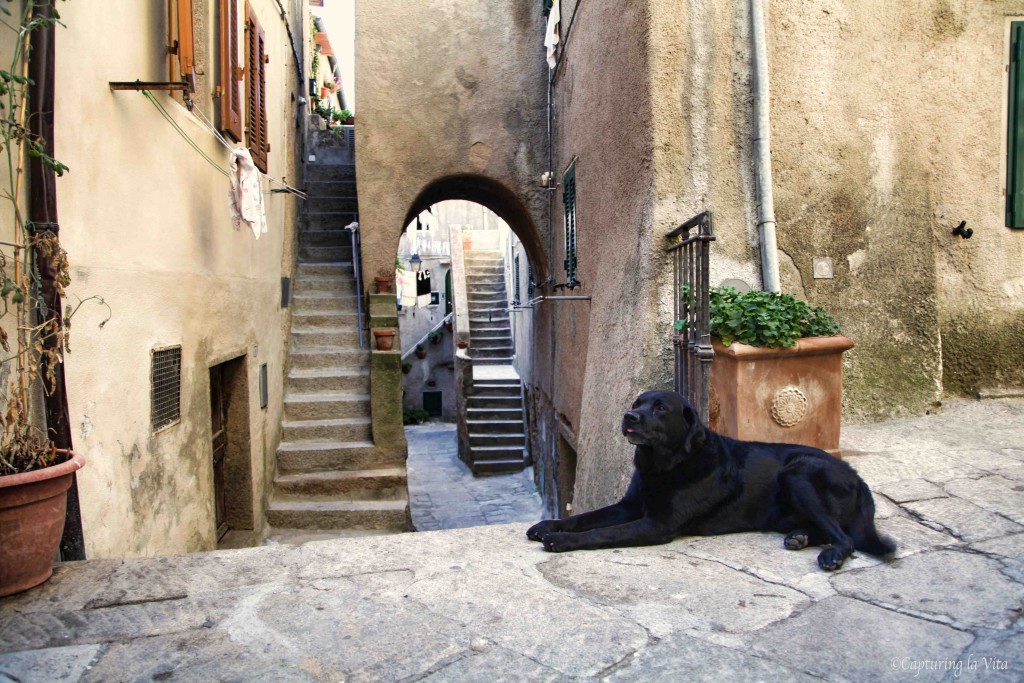 Dogilike.com :: ตะลุยเที่ยว 10 เมืองในฝันของน้องหมาที่คนรักหมาไม่ควรพลาด!