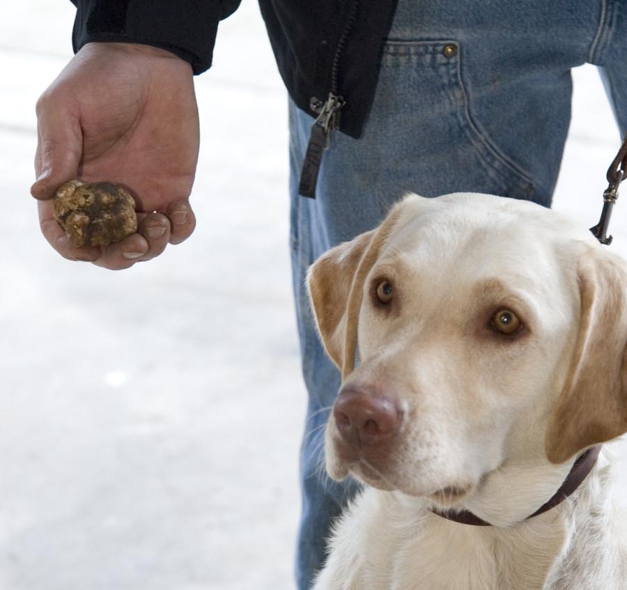 Dogilike.com :: รวม 10 อาชีพสุดเจ๋งของน้องหมาที่เห็นแล้วต้องร้อง ว้าว!