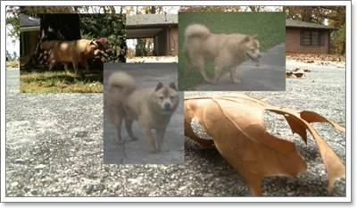 Dogilike.com :: 7 เรื่องราวความรักของน้องหมา ที่คุณต้องกลั้นน้ำตาเอาไว้ไม่อยู่