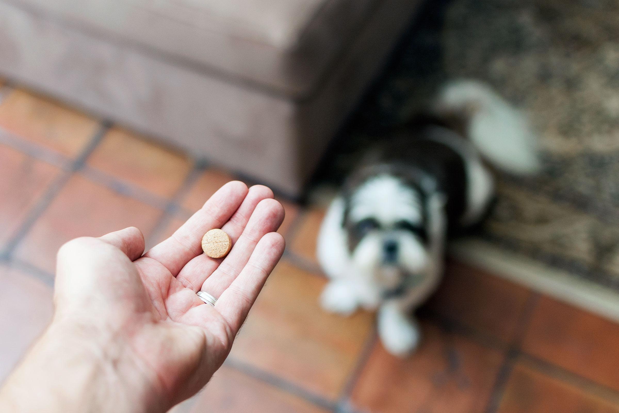 Dogilike.com :: ต้องรู้ไว้..ยากำจัดเห็บและหมัดรูปแบบกินตัวไหนปลอดภัยกับน้องหมา