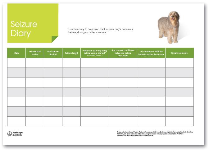 Dogilike.com :: 4 วิธีรับมือกับโรคลมชักในสุนัข