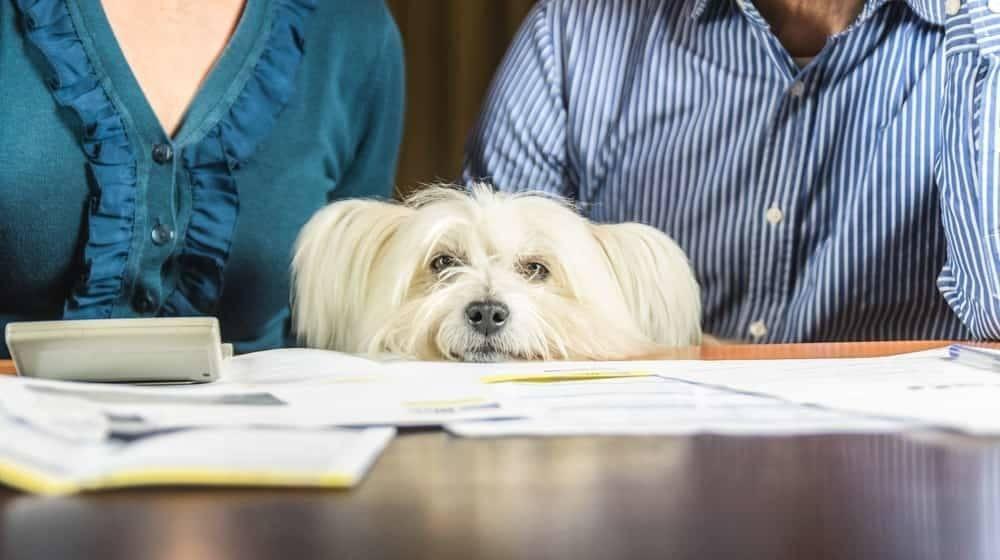 Dogilike.com :: 5 เรื่องน่ารู้เกี่ยวกับสมุดวัคซีนน้องหมา