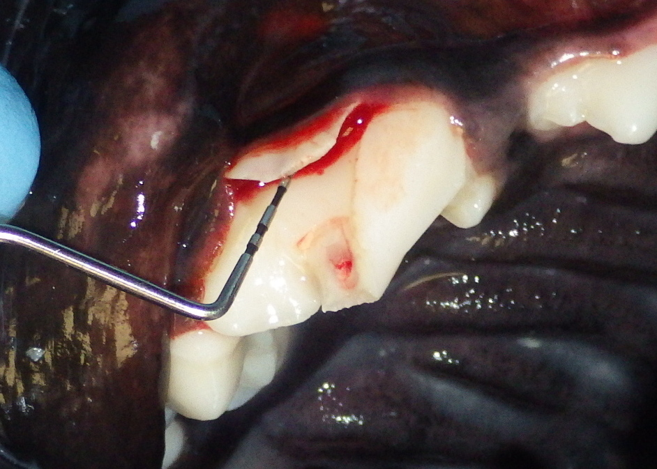 Dogilike.com :: เช็กด่วน!! ความผิดปกติของฟันที่พบบ่อยในสุนัข