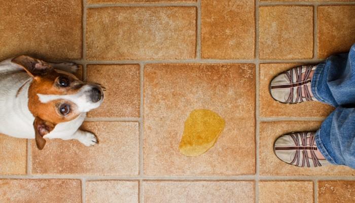 Dogilike.com :: รู้ทันโรคติดเชื้อทางเดินปัสสาวะในสุนัข