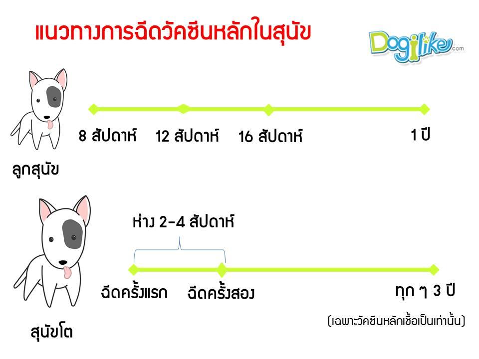 Dogilike.com :: อัปเดต!! สิ่งที่ต้องรู้เกี่ยวกับการฉีดวัคซีนของสุนัขในปัจจุบัน (พ.ศ.2560)