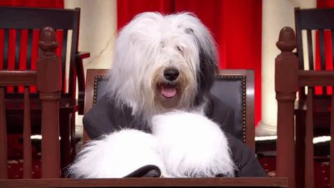 Dogilike.com :: ต้องอ่าน!! กฎหมายที่ผู้เลี้ยงสุนัขต้องรู้