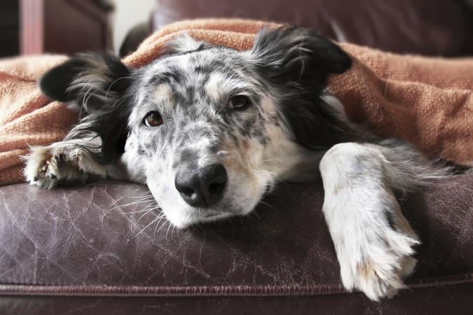 Dogilike.com :: แจกวิธีการดูแลสุนัขป่วยโรคไตวายเรื้อรัง