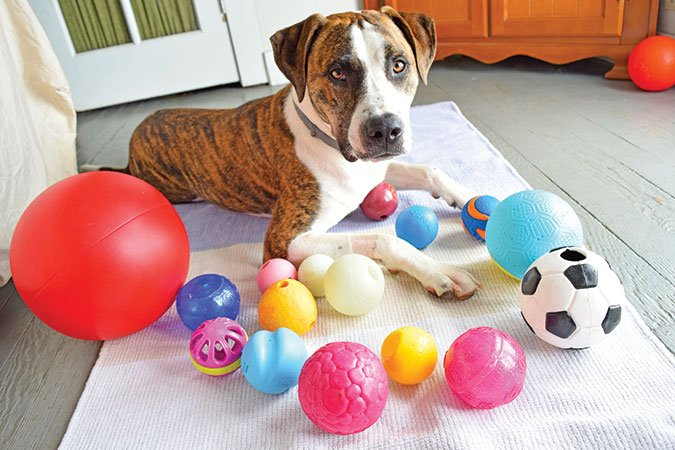 Dogilike.com :: 5 อาชีพน้องหมาสุดแนว แบบนี้ก็มีด้วย