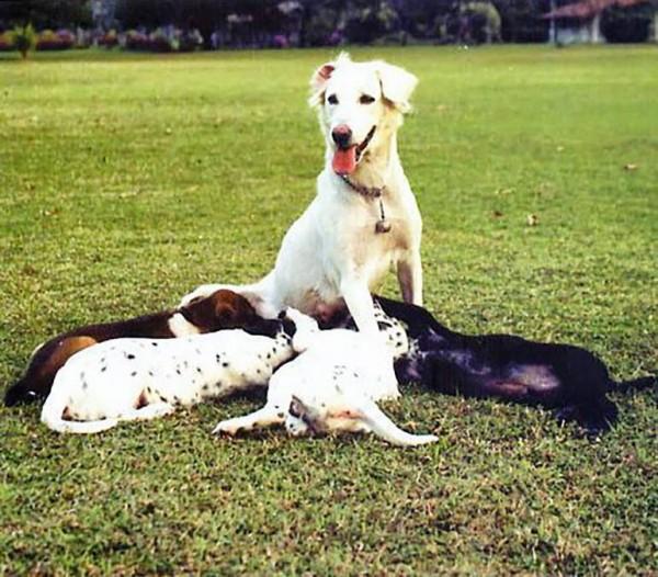 Dogilike.com :: 4 สุนัขทรงเลี้ยงในดวงใจที่คนไทยรู้จักดี