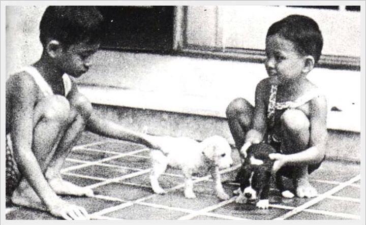 Dogilike.com :: 4 สุนัขทรงเลี้ยงในหลวงรัชกาลที่ 9 ที่คนไทยไม่ค่อยรู้จัก