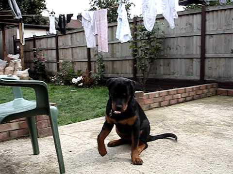 Dogilike.com :: โรคร้ายของน้องหมาที่มาจากการให้อาหารผิดๆ !!!