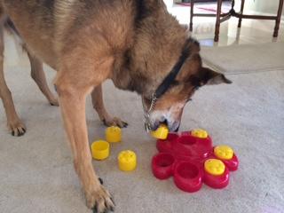Dogilike.com :: ทำอย่างไรให้น้องหมาสูงวัยมีคุณภาพชีวิตที่ดีขึ้น
