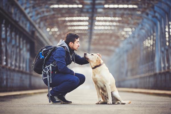 Dogilike.com :: 4 การค้นพบทางวิทยาศาสตร์ไขความลับน้องหมาที่ทุกคนคาใจมานาน