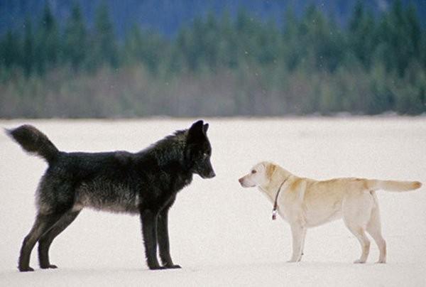 Dogilike.com :: ซ่อนเก่ง!!! เคยสงสัยกันไหม ... น้องหมาขุดหลุมฝังอาหารทำไมกันนะ?