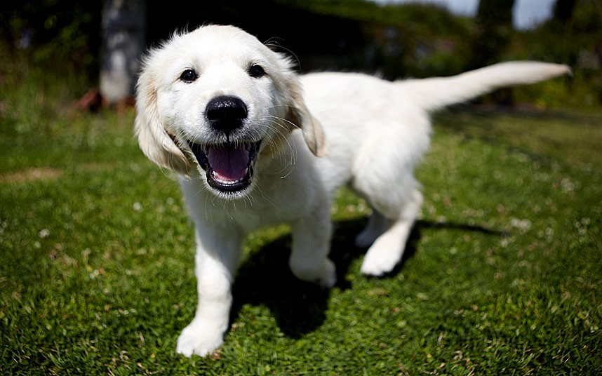 Dogilike.com :: ไขความลับ .. น้องหมาใช้ใบหน้าสื่อสารกับมนุษย์ได้ไม่ใช่แค่แสดงอารมณ์ !!