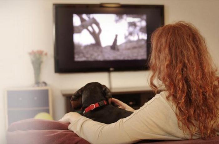 Dogilike.com :: น้องหมาก็ดูทีวีรู้เรื่องได้!! รู้จัก DogTV ช่องทีวีสำหรับน้องหมาโดยเฉพาะ