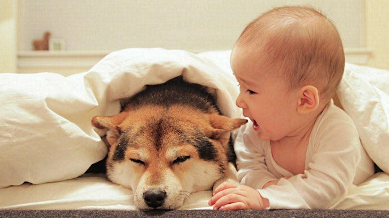 Dogilike.com ::  มีลูกไม่ทิ้งหมา ... เลี้ยงลูกก็เลี้ยงหมาได้ แถมมีผลดีกับเด็ก ๆ ด้วย