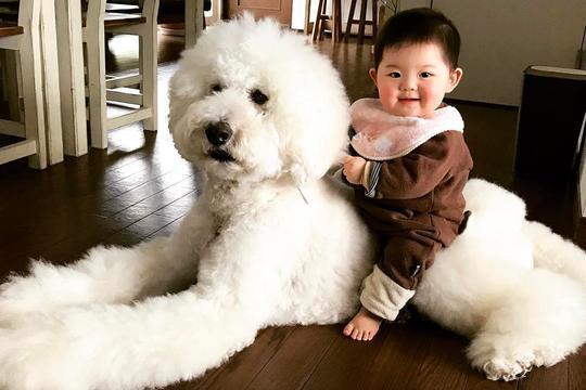 Dogilike.com :: How to 4 Step เลี้ยงน้องหมากับลูกน้อยยังไงให้มีความสุขสุดๆ !!!