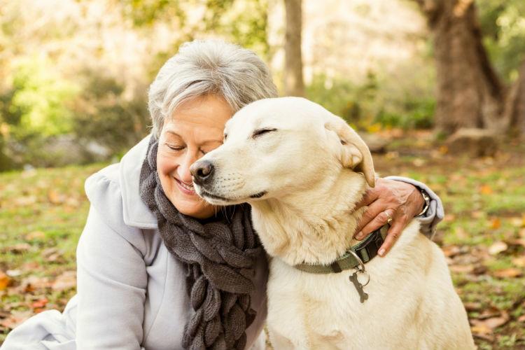 Dogilike.com :: 5 วิธีต้องรู้!! ช่วยกระตุ้นพัฒนาการน้องหมาแก่ให้ไม่ซึมเศร้า