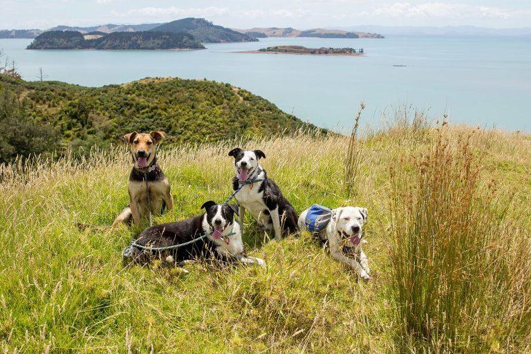 Dogilike.com :: 6 ประเทศที่ค่าปรับสุดโหดถ้าไม่ใช้สายจูงน้องหมาในที่สาธารณะ