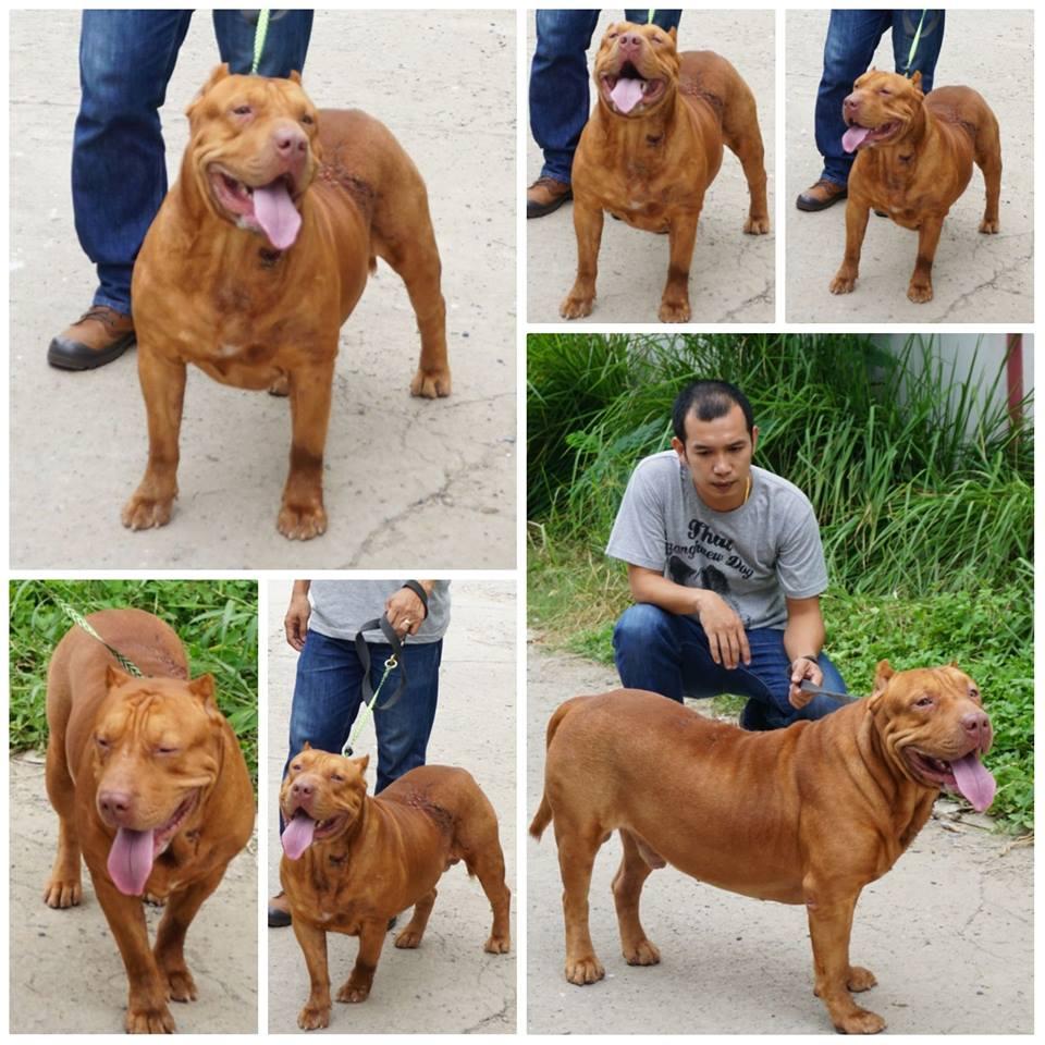 Dogilike.com :: สัมภาษณ์ ครูหนึ่ง นักปรับพฤติกรรมสุนัข ... หมาดุ เลี้ยงให้ไม่ดุได้จริงหรือ?