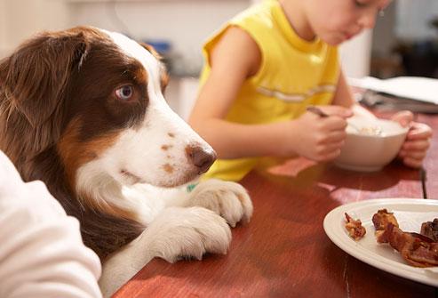Dogilike.com :: รู้ไว้! สปอยล์น้องหมามากไป ต้นเหตุปัญหาน้องหมาไม่มีวินัยในการกินอาหาร