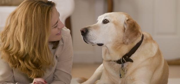 Dogilike.com :: 3 ขั้นตอนง่าย ๆ ฝึกน้องหมาให้เข้าใจภาษาคน