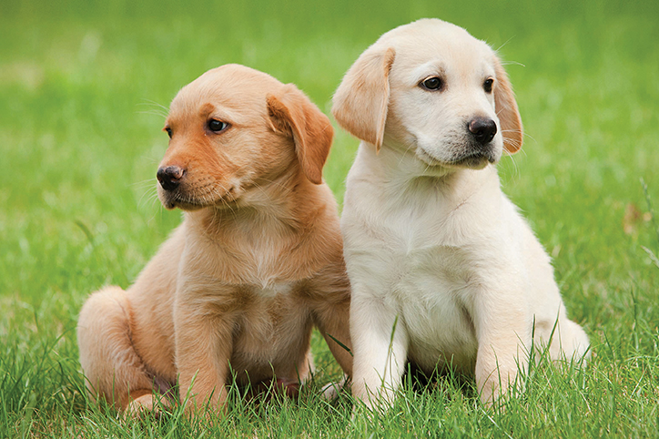Dogilike.com :: หมาเด็ก(มา)ใหม่ ต้องรับมือยังไงถึงจะเอาอยู่