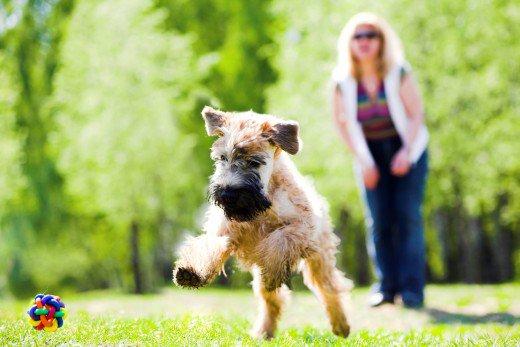 Dogilike.com :: รู้รึเปล่า นิสัยตัวติดกับน้องหมา ต้นเหตุปัญหาหมานิสัยเสีย!!