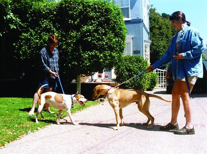 Dogilike.com :: 5 เหตุผลที่สายจูงสำคัญกับคนเลี้ยงน้องหมาทั่วโลก