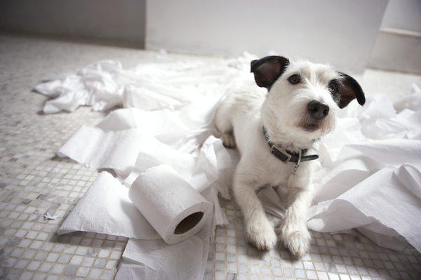 Dogilike.com :: 5 สิ่งของสุดงง ที่เราไม่มีทางเข้าใจว่าน้องหมาขโมยไปทำไม!!