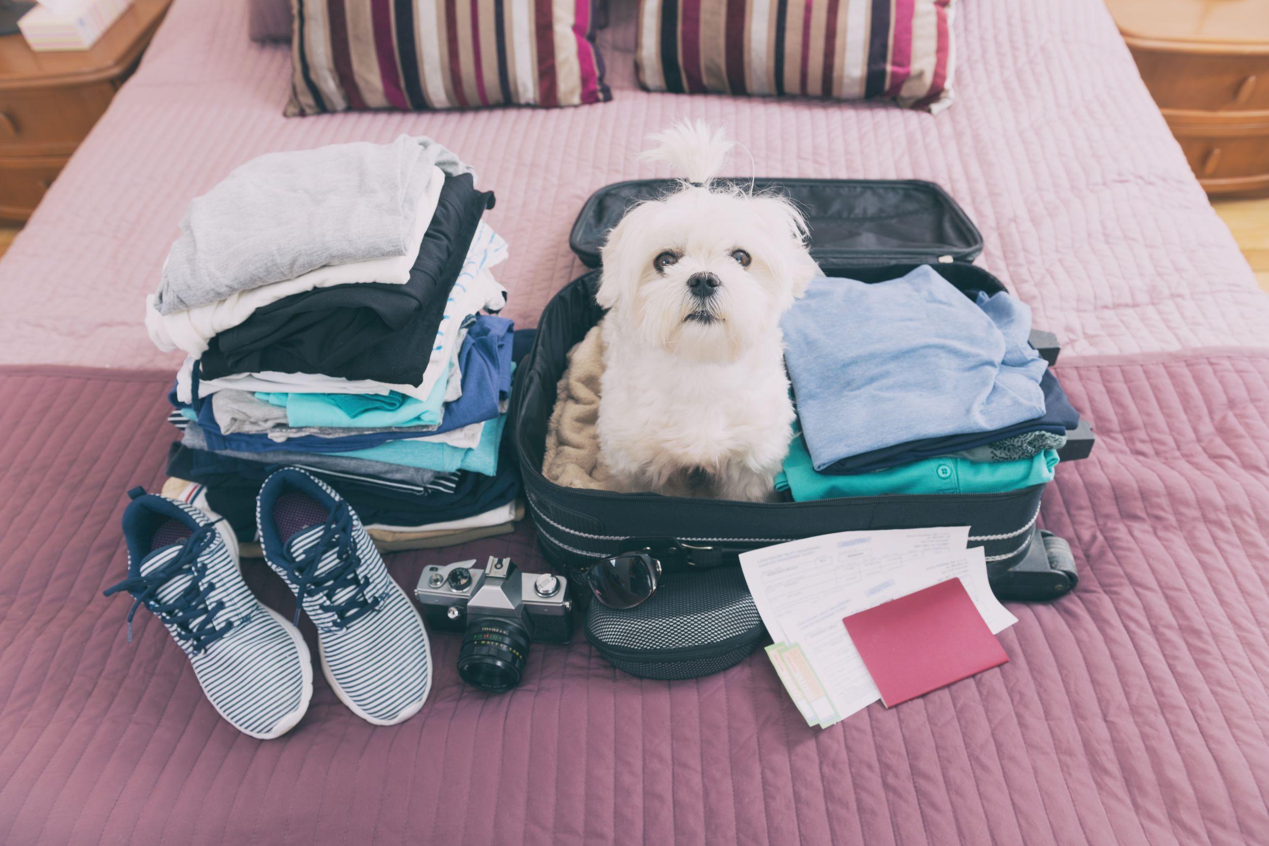 Dogilike.com :: 10 วันก่อนเดินทางไกล เตรียมตัวน้องหมายังไงให้พร้อมเที่ยว