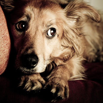 Dogilike.com :: 4 สิ่งที่คิดไม่ถึงว่าจะเกิดขึ้นกับน้องหมาในคืนวันลอยกระทง