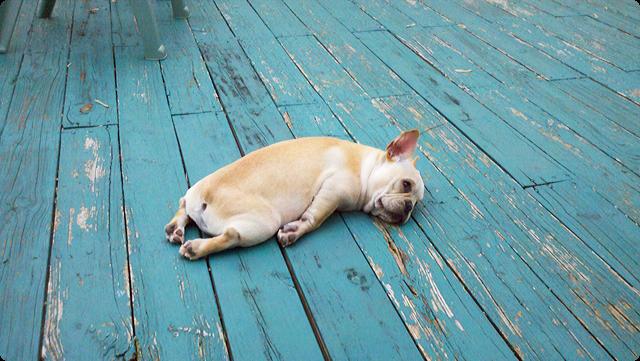 Dogilike.com :: ท่านอนน้องหมาบอกภาวะอารมณ์ได้นะ รู้ยัง?