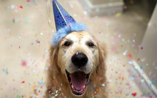 Dogilike.com :: How To ... 5 วิธีคิดเปลี่ยนชีวิตให้คุณและน้องหมาสุขตลอดปีตลอดไป