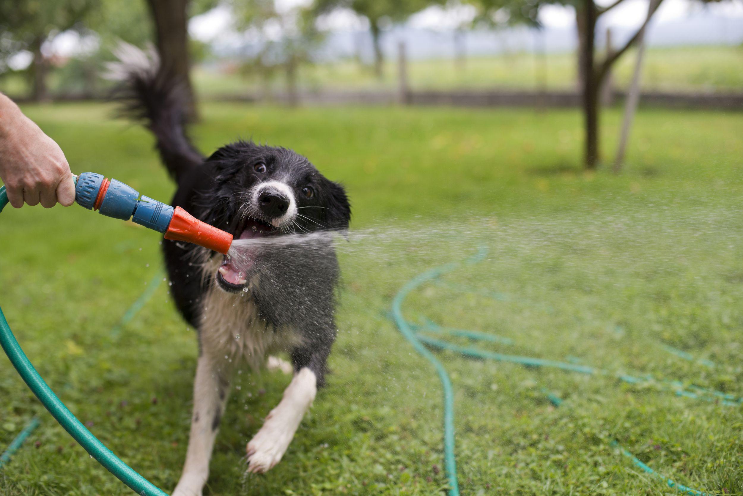 Dogilike.com :: งงป่ะ ... ทำไมน้องหมาชอบเล่นน้ำ แต่ไม่ชอบอาบน้ำ!?