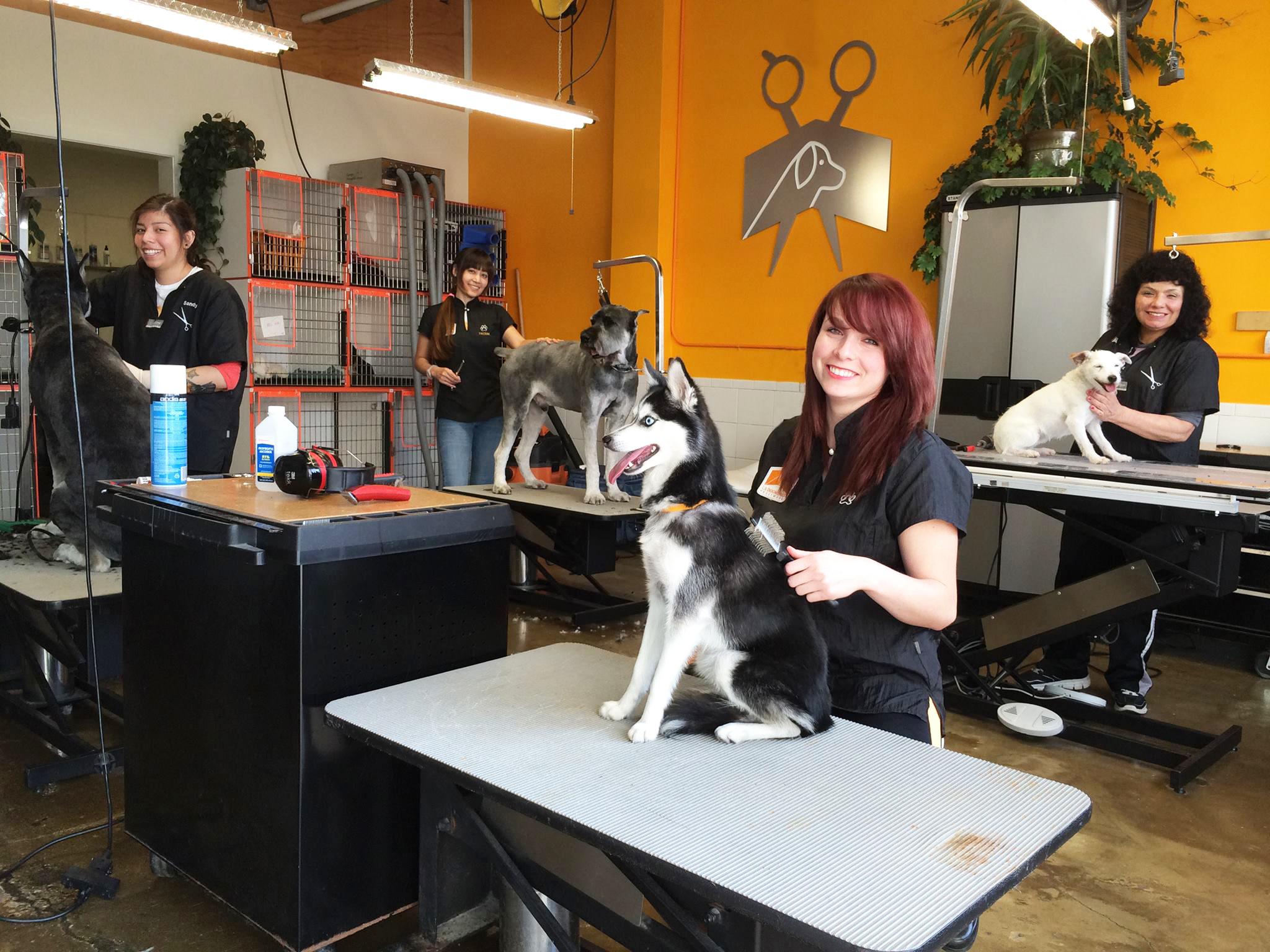 Dogilike.com :: กว่าจะเป็น กูรูด้านตัดขนสุนัข กรูมเมอร์หญิงไทยเพียงหนึ่งเดียวในลอสแอนเจลิส