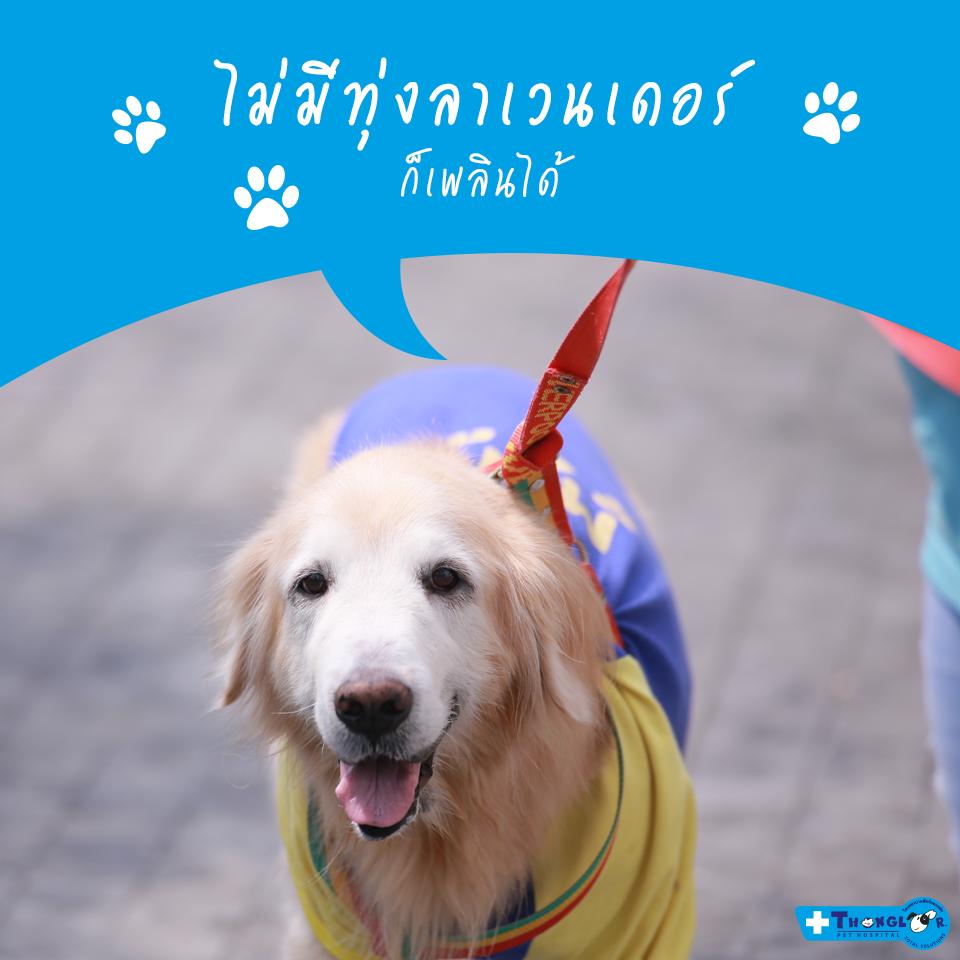 Dogilike.com :: โสดแบบไม่ง้อผู้! เพราะมีน้องหมาก็อินเลิฟได้