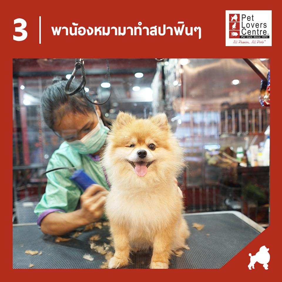 Dogilike.com :: ของดีบอกต่อ 5 สิ่งที่คนรักน้องหมาห้ามพลาด เมื่อไปช้อปที่ Pet Lovers Centre