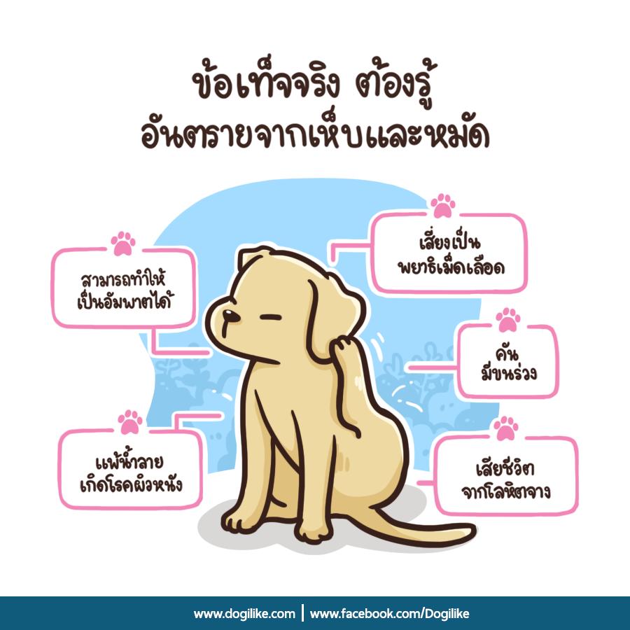 Dogilike.com :: เห็บหมัด ภัยร้ายใกล้ตัวน้องหมาที่คุณรัก