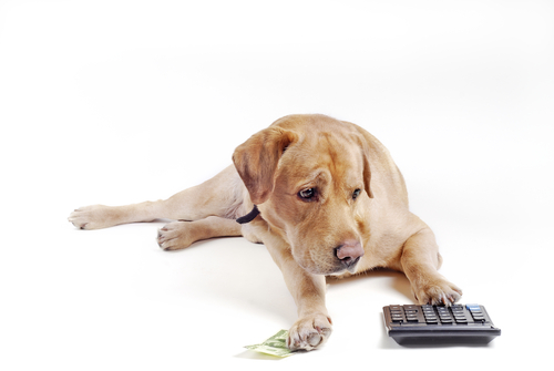 Dogilike.com :: สรุปดราม่า ... จะเอายังไงกับกฎหมาย ลงทะเบียนสัตว์เลี้ยง
