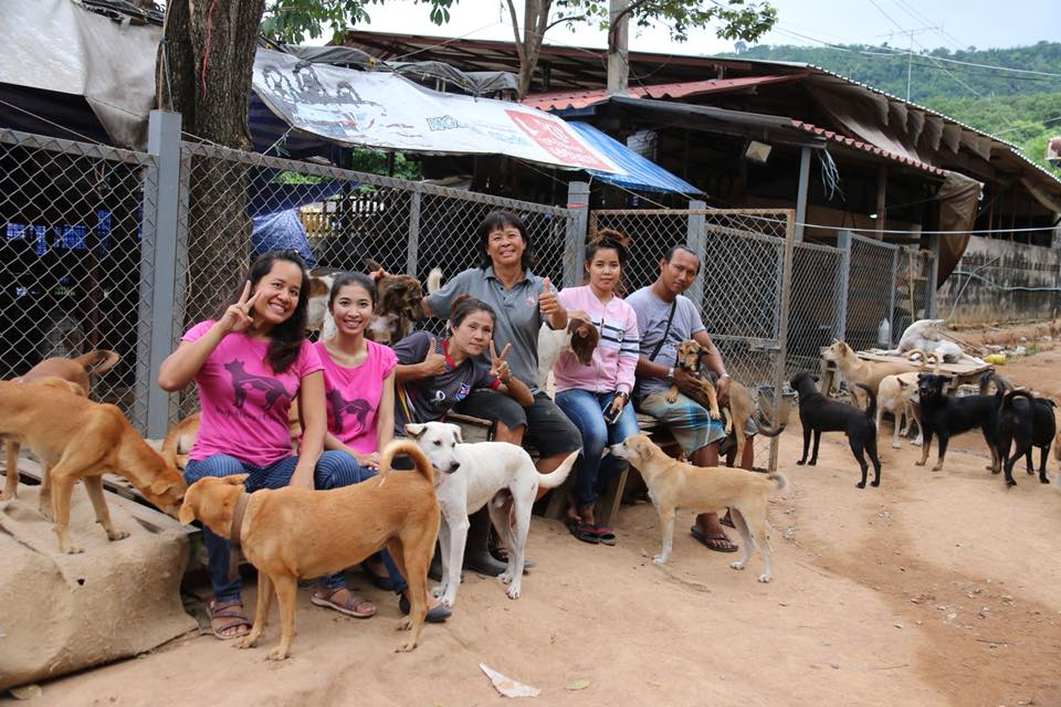 Dogilike.com :: จับเข่าคุย แอดมินเพจหยุดทายาทจรจัด ... อะไรทำให้หมาจรไม่หมดไปจากสังคมไทย